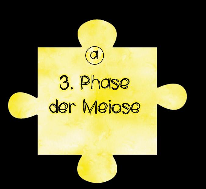 Anaphase 10