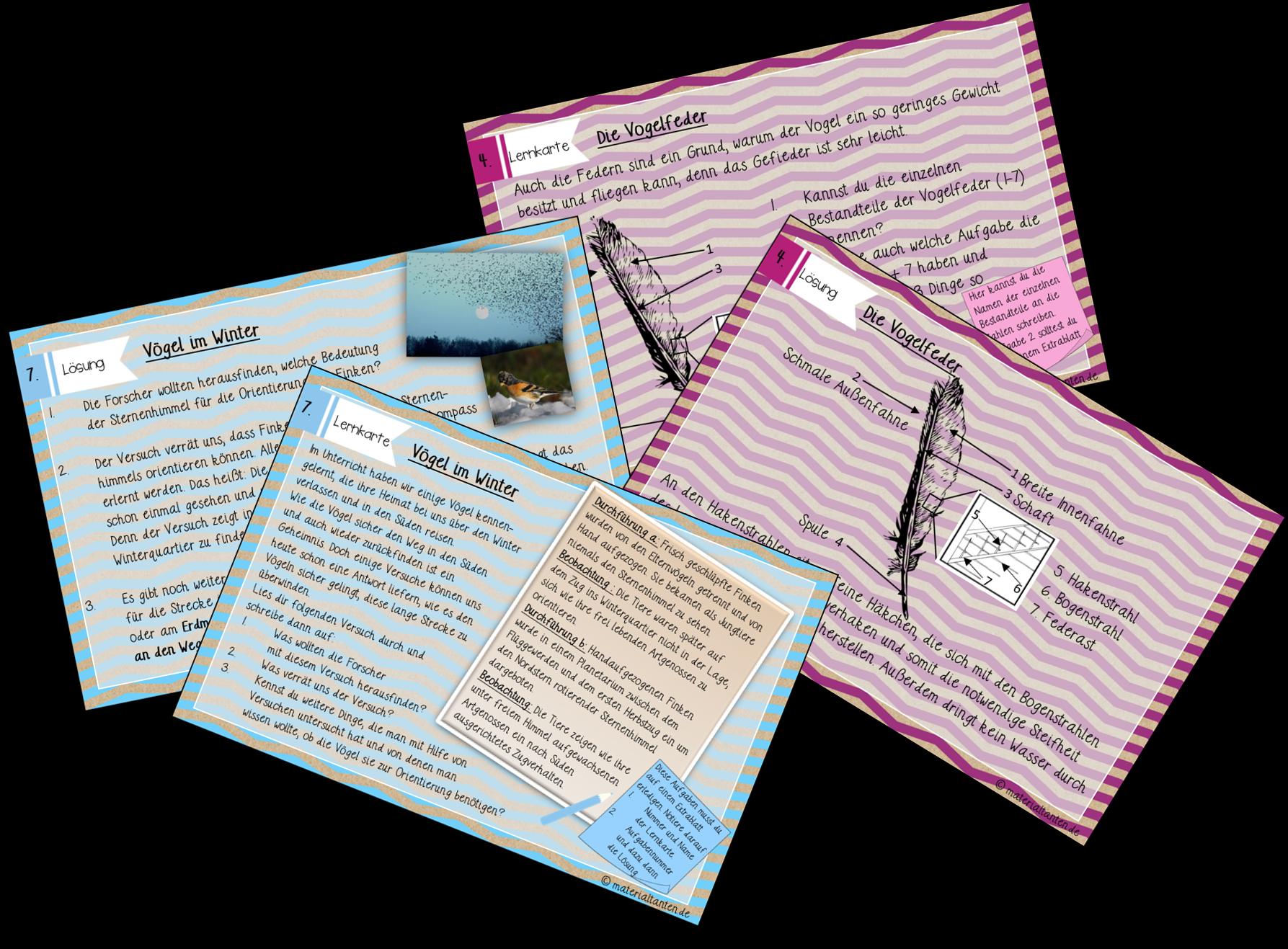 Lernkarten als Vorschau