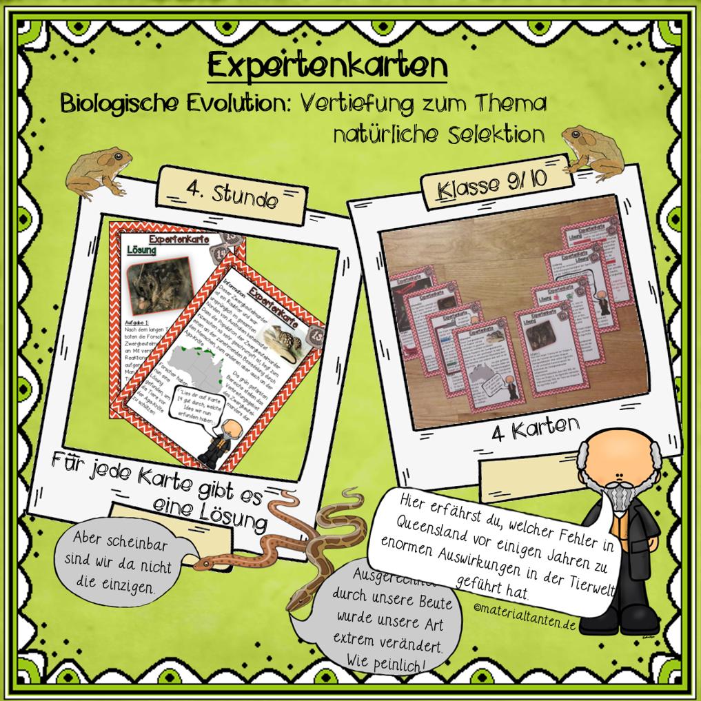 Evolution: Expertenkarten 13-16 - Materialtanten