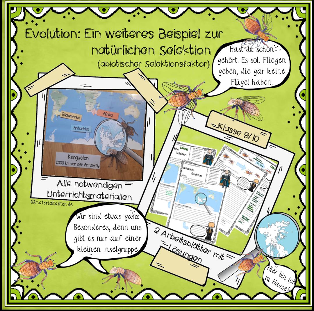 Evolution Stunde 5: Vertiefung der natürlichen Selektion ...