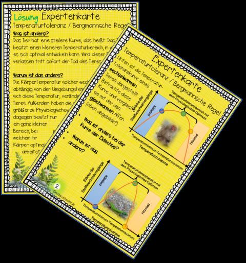 2 Expertenkarten