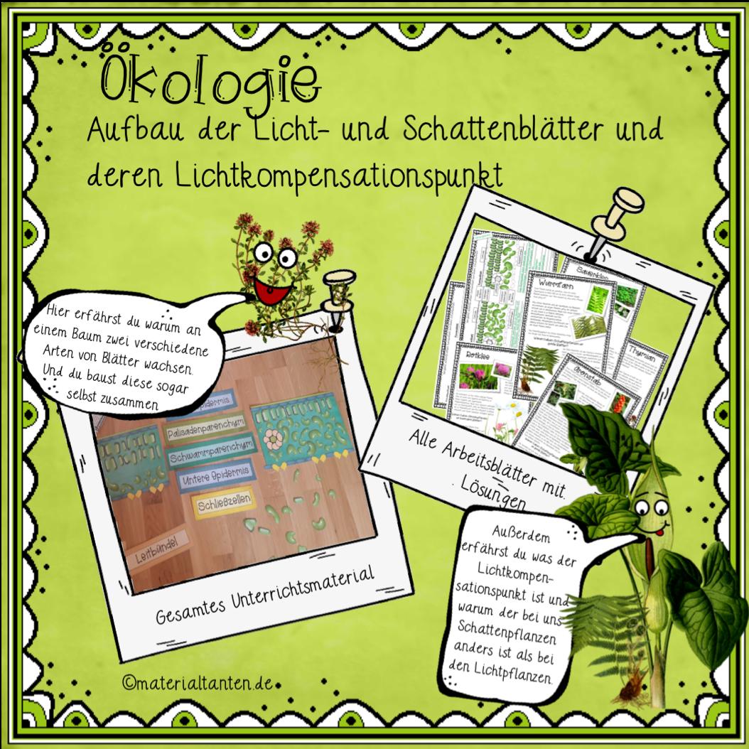 Ökologie: Sonnen- und Schattenblätter und ihr ...