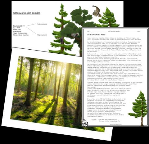 Stockwerke des Waldes_Bild4