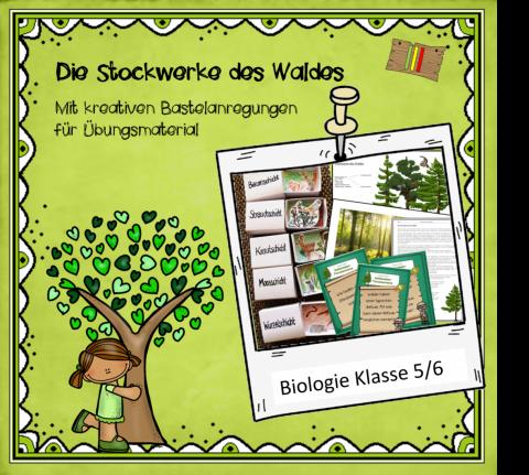 Stockwerke des Waldes_Deckblatt