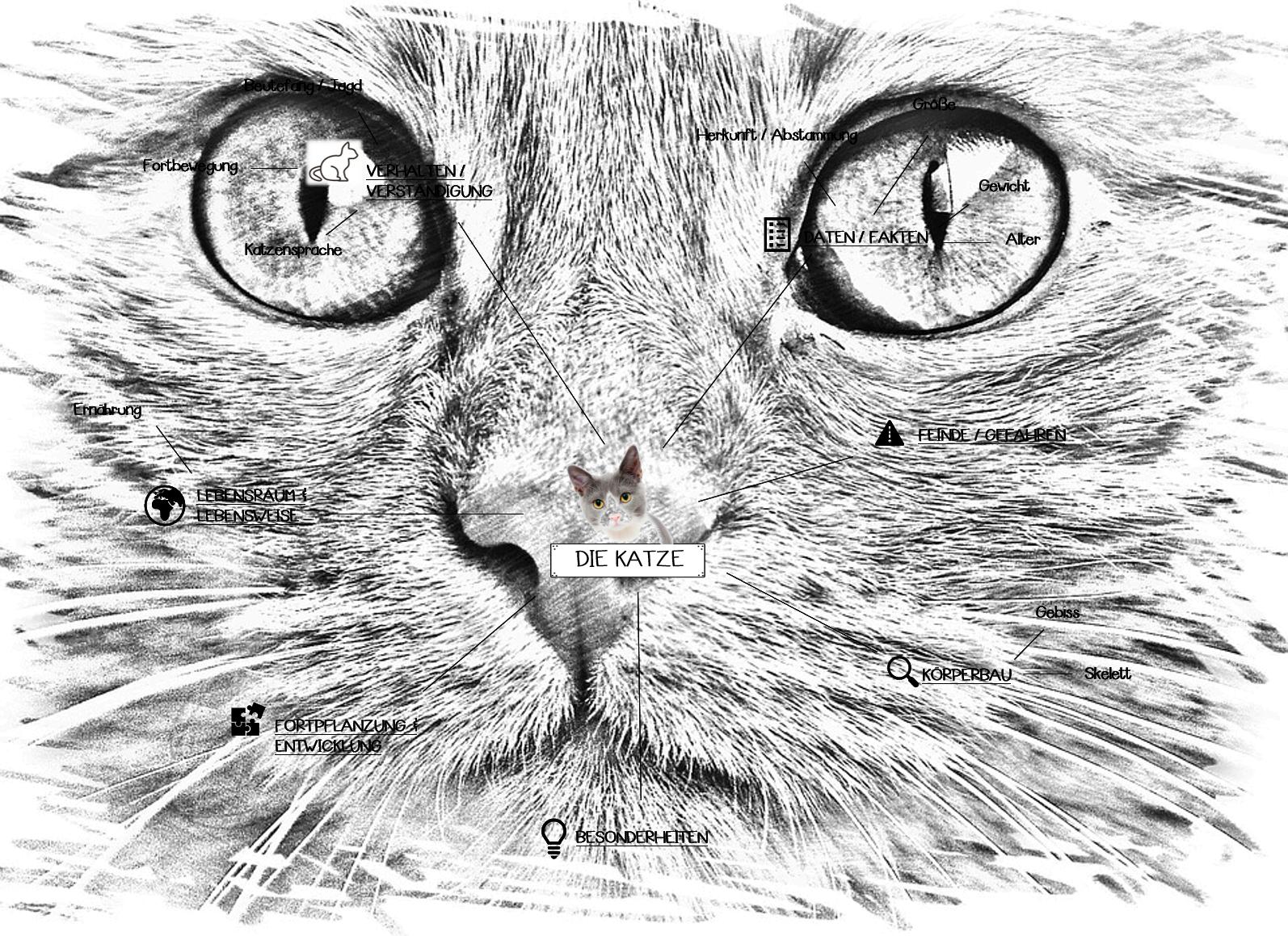 Bio 20/20 Die Katze   Einstieg